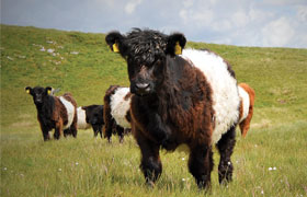 Pasture for Life – Case Study – Neil Heseltine, Yorkshire Dales