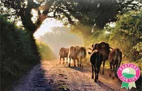 First-ever Pasture for Life calendar