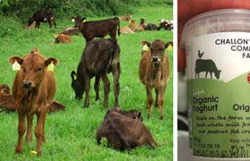 Pasture for Life milk certification launched