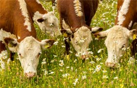 Certification for grass-fed meat and dairy now available in Ireland