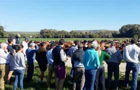Farmers see how Pasture for Life dairying can be done