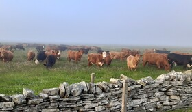 Pastures in the mist: Orkney farmers gather to hear about Pasture for Life