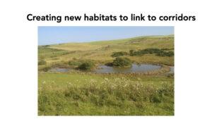 Creating new habitats at Peelham Farm