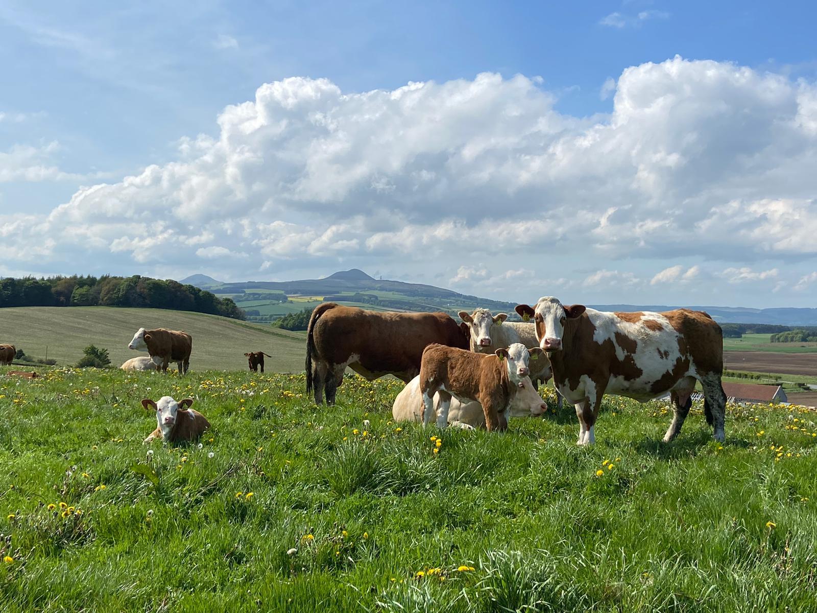 'Pasture for Life' makes good financial sense
