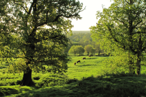 View from the Greensand Ridge