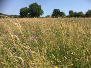 'Upper Peans' pasture